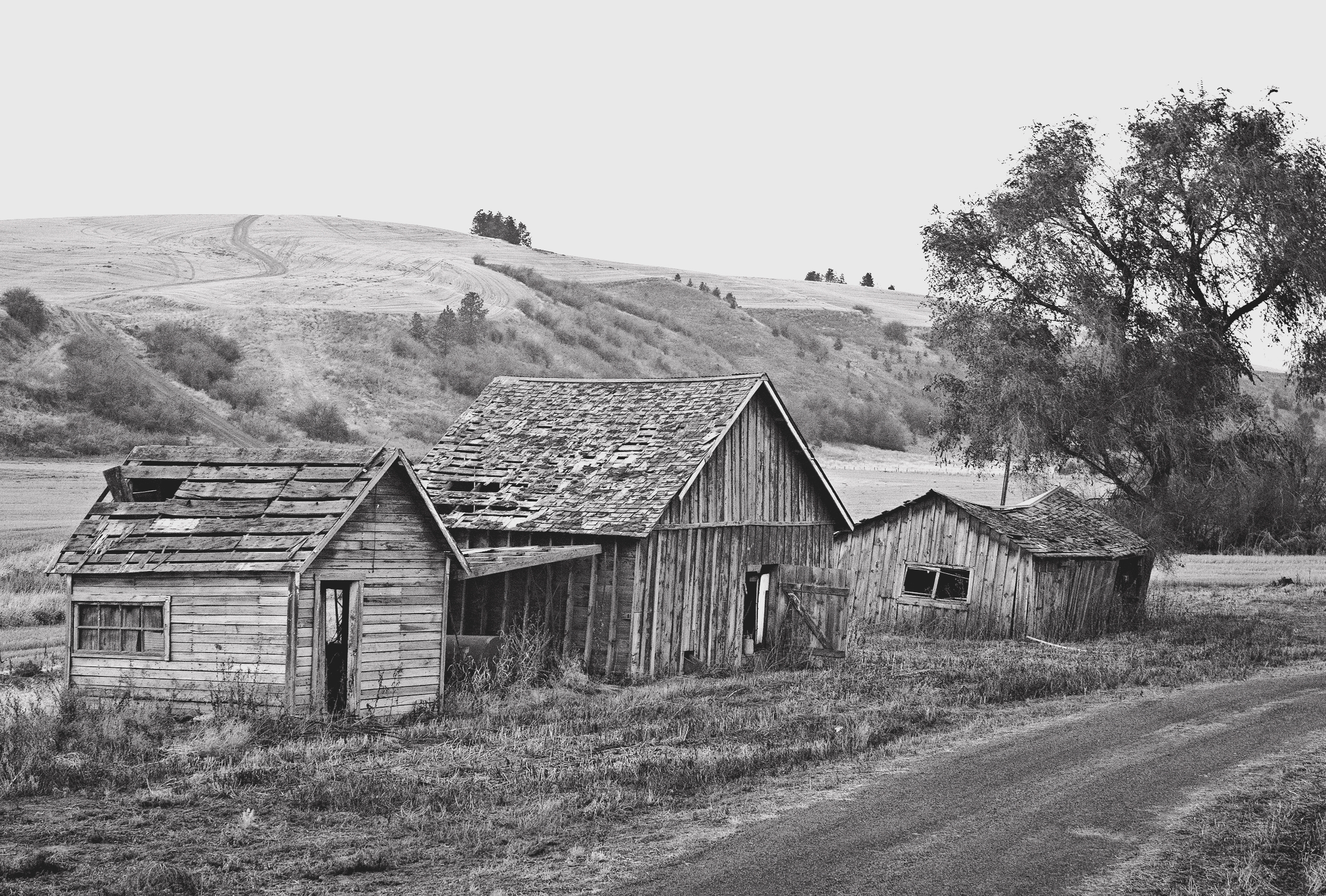 The Farm in the Palouse